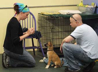 Puppy Class sits and downs for fun