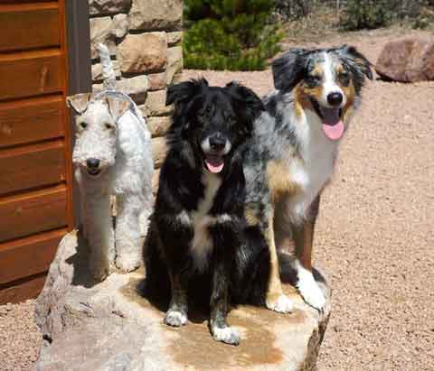 Photo of Dale Klausner's dogs, Gus, Zoe and Zeke